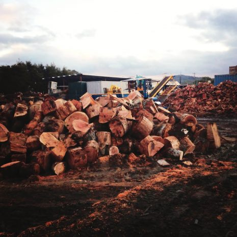 What how the timber is processed